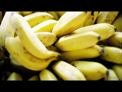 Banana Disease - Behind the News