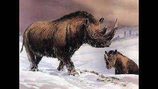 Ark Survival Official Pve #23 Nosorog (Woolly Rhino)