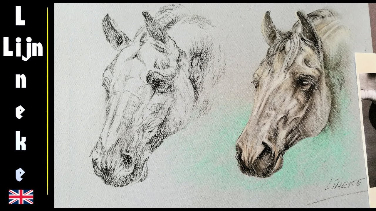 How to draw a Horsehead portrait - Horse anatomy study - YouTube