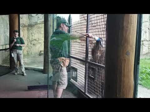 Bear training