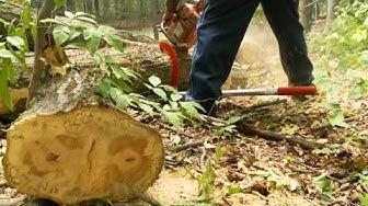 Woodchuck Timber Jack Tool Review