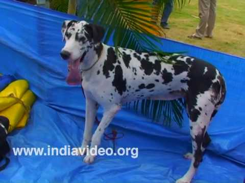 Dog Show at Palakkad, Kerala