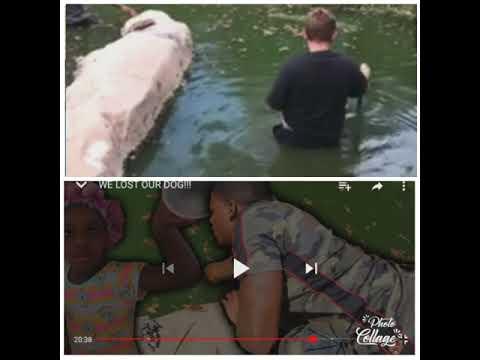 Cj so cool lost his dog!!!!