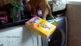 Kitten cat knocking food boxes on floor. Calamity. Funny