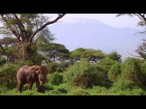 Vanishing Heritage: Protecting the Elephants of Amboseli