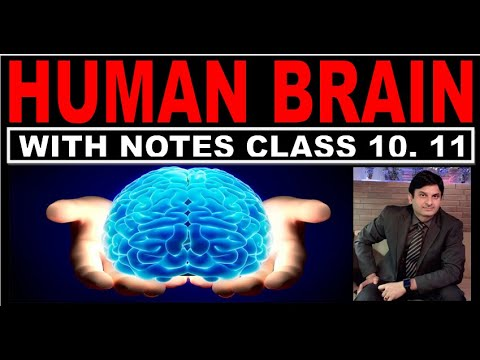 HUMAN BRAIN  CLASS X WITH NOTES/CLASS 10/ CLASS 11 ...