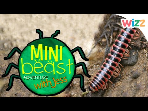 Children Learn About The Millipede