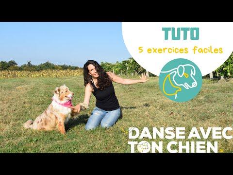 5 exercices faciles - Dog dancing - berger australien 17 mois