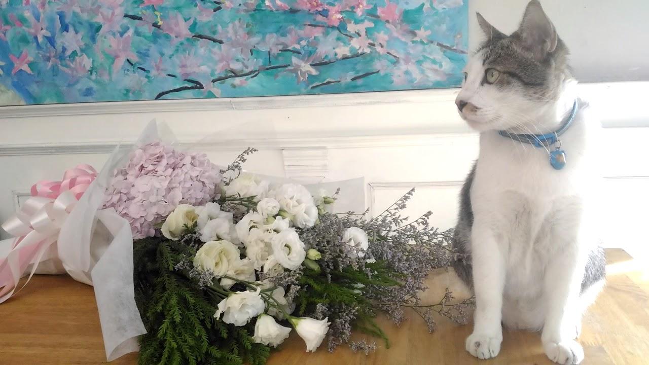 Kitten bouquet ดอกไม้กับแมว - YouTube