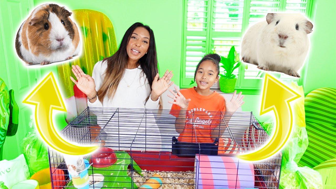 Vlog : NETTOYAGE de la cage de mes deux COCHONS D'INDE JUSTIN et BIEBER