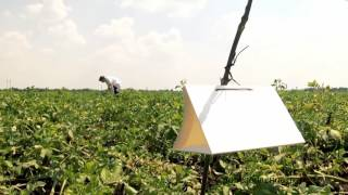 видео применение химических ловушек