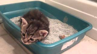 Foster Kitten's first big poop in litter box