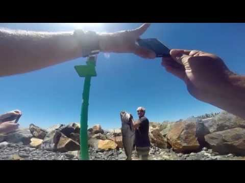 Breakwall Jew Fish, Port Macquarie