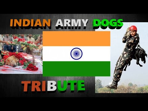 Tribute to Indian Army Dogs | Smart Dogs Training |