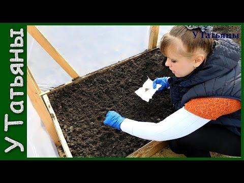 КАПУСТА на рассаду! Как и когда сеять капусту на рассаду. Секреты посева капусты. | белокачанная | выращивание | рассадой | цветная | рассада | посадки | посадка | капусты | капуста | сроки
