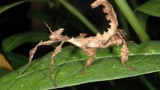 दुनिया के 5 सबसे खतरनाक कीड़े 5 Most Dangerous Bugs Around The World