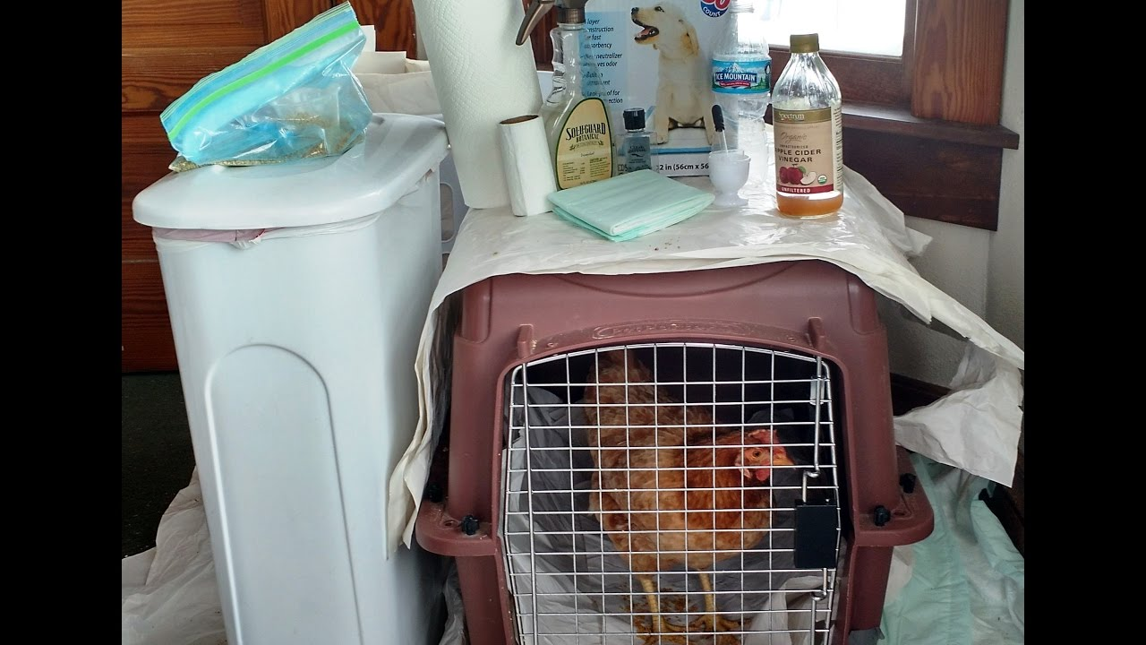 How To Set Up A Quarantine Room In Home To Isolate Your Sick Chickens