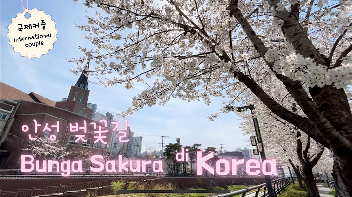 Korea di Musim Semi 국제커플 안성 벚꽃길 Beautiful Korea Cherry Blossom