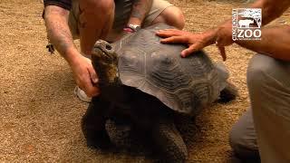 Galapagos Tortoise More Home to Roam - Cincinnati Zoo