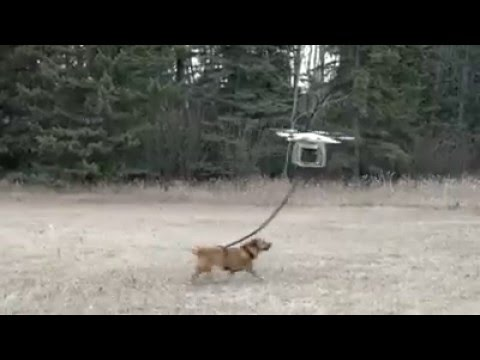 Walking Your Dog With A Drone