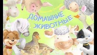 Домашние животные - познавательный мультфильм