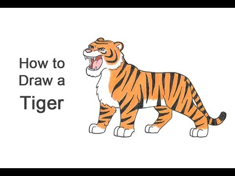 1f7ac8cd6430e How to Draw a Tiger Roaring (Cartoon) VIDEO & Step-by-Step Pictures