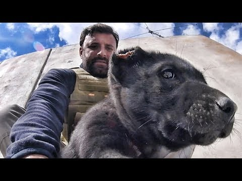 Rescuing Abused Puppies from Afghanistan
