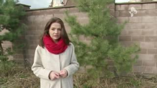 Экс-жена миллионера обвинила его в избиениях и попытке похищения детей в Москве