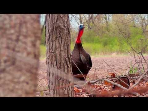 Wisconsin Spring Turkey Hunt