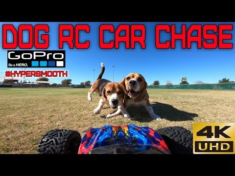 Dog RC Car Chase November 15, 2019 Traxxas GOPRO 4K