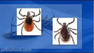Termites, Bed Bugs, Rodents, and Pest Control with A-1 Exterminators