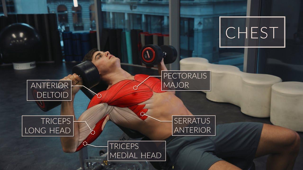 Exercise Anatomy: Chest Workout | Pietro Boselli - YouTube
