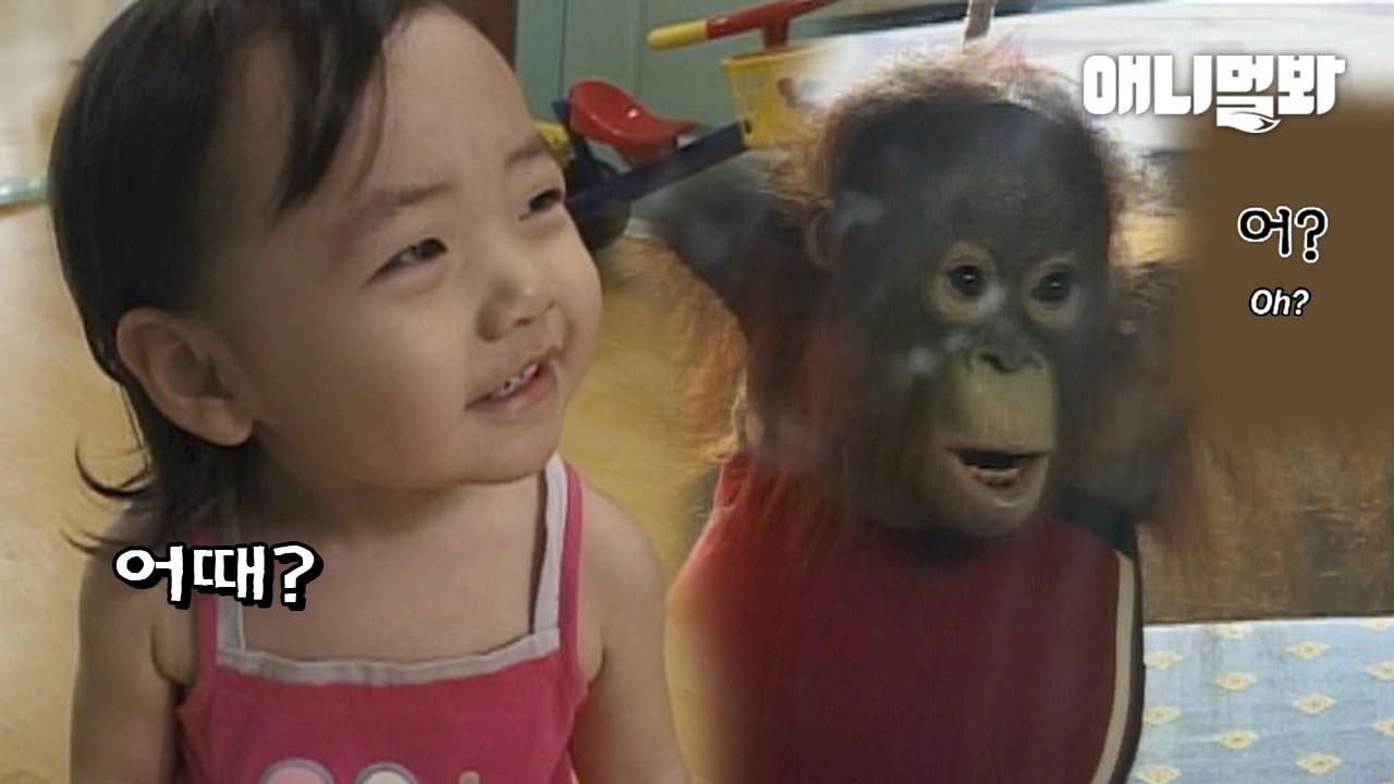사람 손에 자란 아기 오랑우탄..처음으로 거울을 보자 한 행동ㅣRaised By Humans, Orangutan React To A Mirror For The First Time