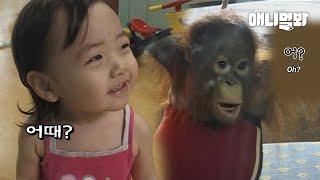 사람 손에 자란 아기 오랑우탄..처음으로 거울을 보자 한 행동ㅣRaised By Humans, Orangut…