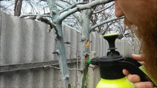 видео Короед на яблоне |Как спасти яблоню от короеда методы, средства