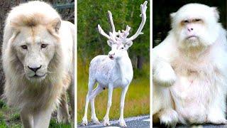 Impresionantes Animales Blancos Que Tendrás Suerte De Ver