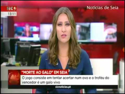 Morte do Galo Noticia Sic - Varzea de Meruge 11/09/2017