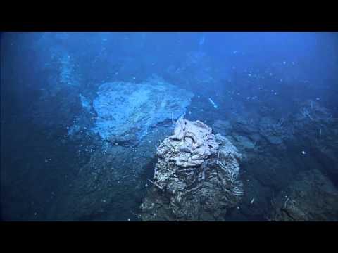 Vent Life - ROPOS Dive R1922 - Survey and Sampling at ABE