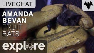 Bat Appreciation Day with Amanda Bevan - Live Chat thumbnail