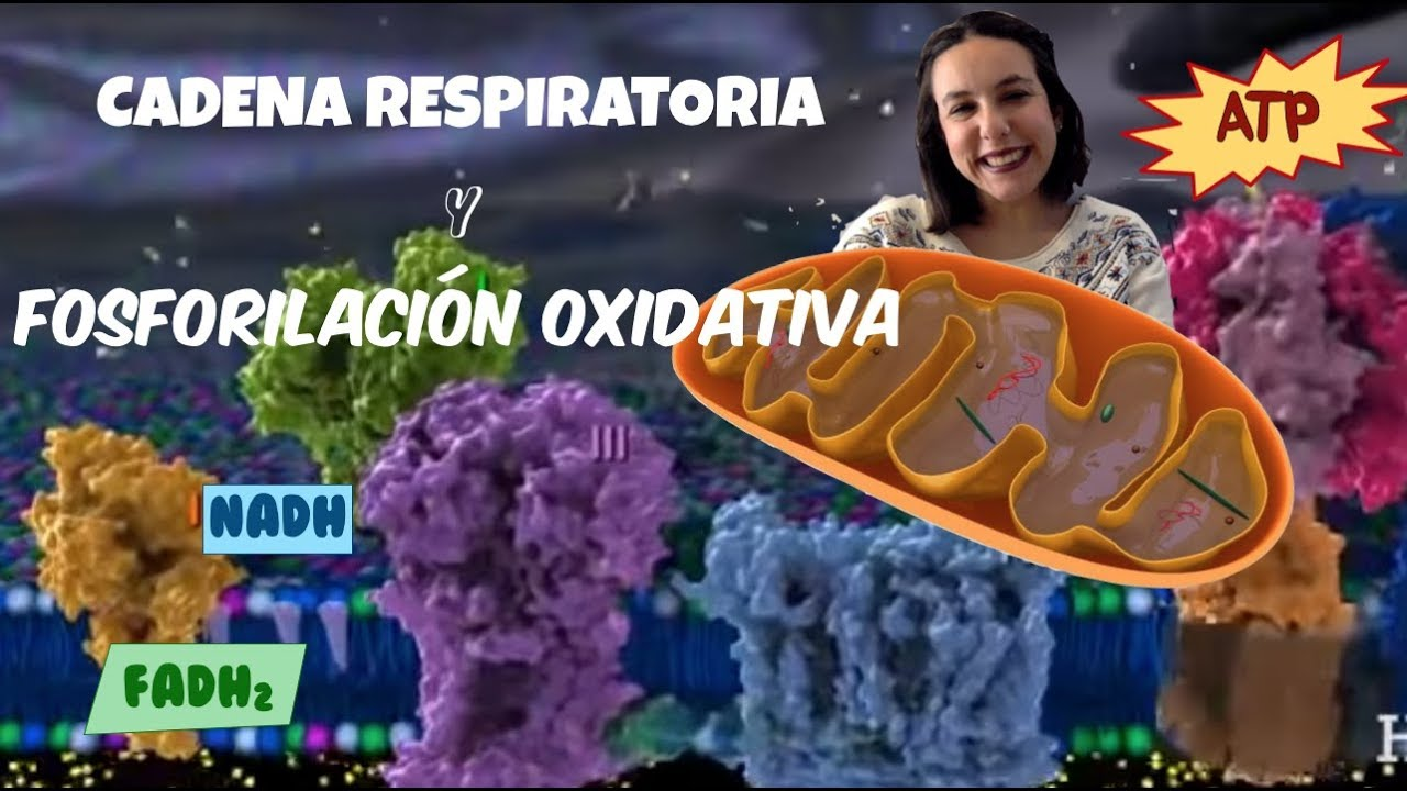 Cadena de transporte de electrones y fosforilación oxidativa - 2º de bachiller - Bio[ESO]sfera
