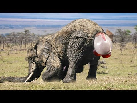 Top 6 Animals Giving Birth – Elephant, Snake, Zebra, Impala, Shark, Wildebeest