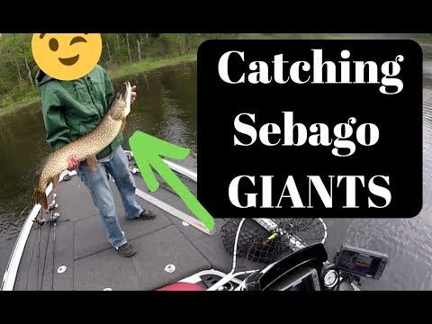 Catching Giant Pike On Sebago Lake