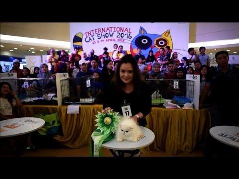 Concours de beauté pour chats en Malaisie
