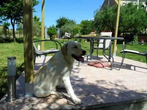 Allevamento amatoriale cani labrador : La Casa del Sole & della Luna