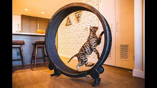 CAT COMPILATION  Cat Exercise Wheel  Cats Who Love To Exercise