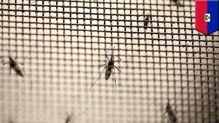 The next Zika? Mayaro virus discovered in Haiti for the first time - TomoNews