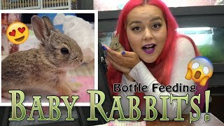 I Rescued Baby Rabbits, Bottle Feeding and Raising Orphans