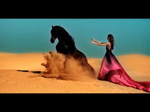 Horse Music video Bullet Train (Jump, Free Horses, Dressage, Liberty ,Wersten and racing)