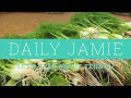 LET'S TALK ABOUT FENNEL! | Jamie Oliver