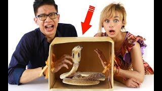 What's In The Box Challenge! Binatang Hidup!! Feat FF Audrey